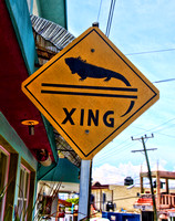 Iguana Crossing (and friends)